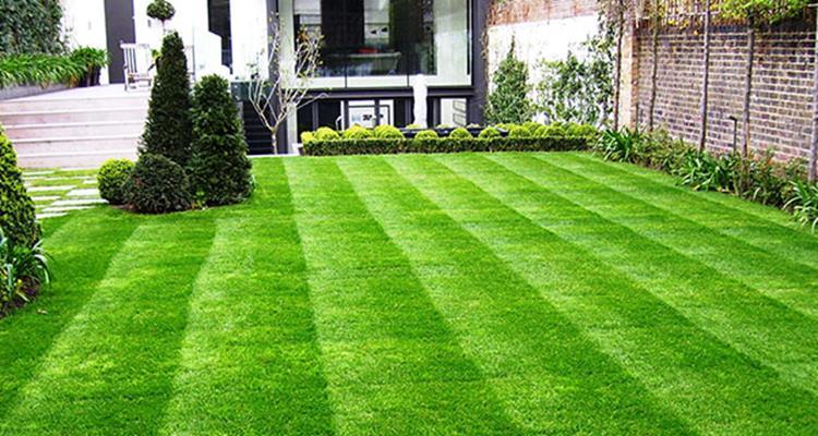 smart-garden-lawn